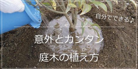 植え方 植木 庭木 植木組合