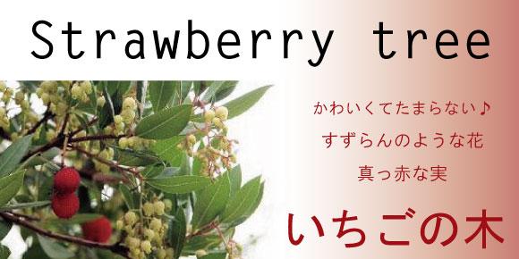 イチゴノキ いちごの木 ストロベリーツリー