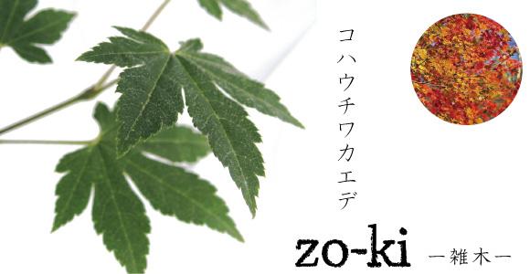 雑木 コハウチワカエデ モミジ
