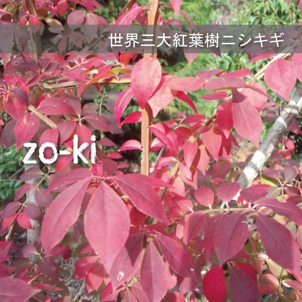 にしきぎ ニシキギ 紅葉
