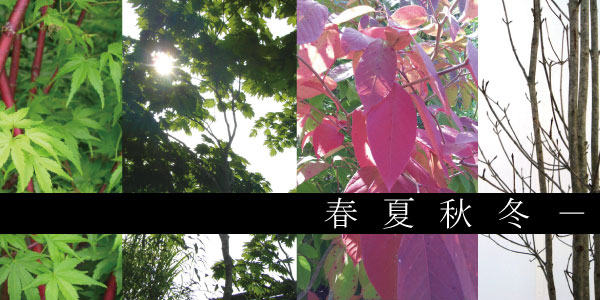 春夏秋冬 落葉樹