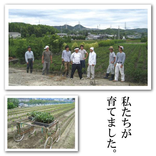 農事組合法人 桃山町植木組合 私たちが育てました